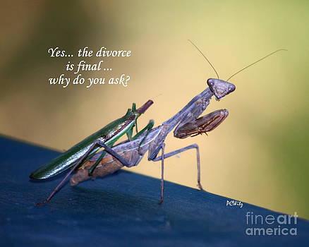 Patrick Witz - Divorce Is Final