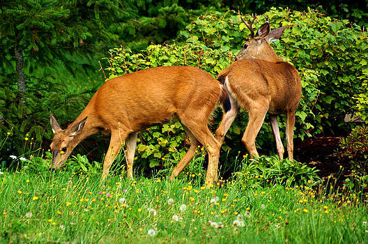 Doe and Buck by Wendy Emel