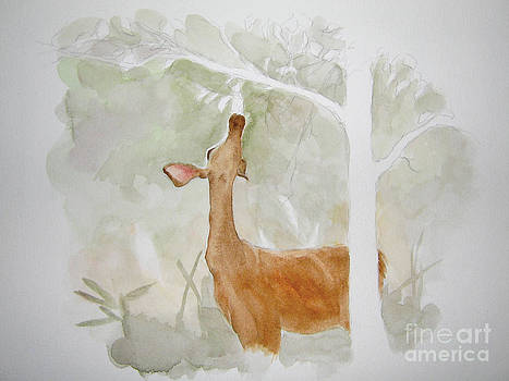 Doe Reaching for Apple by Sara Alexander Munoz