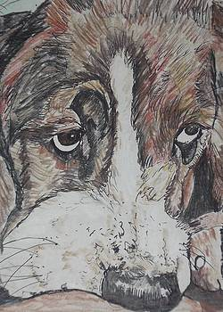 Dog 2 by Nashoba Szabol