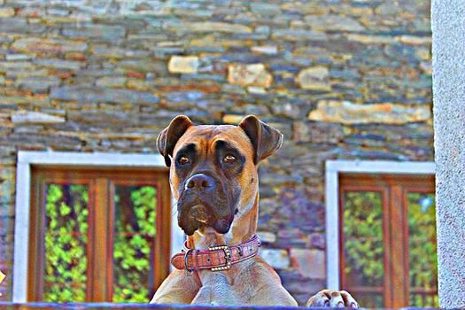 Dog Buldog by Jenny Senra Pampin