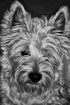 Dog BW by Picturegallery