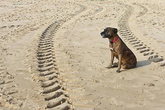 Dog by Daniel Kulinski