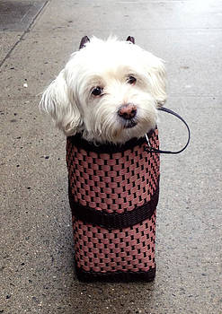 Dog in a Bag by Tanya Braganti