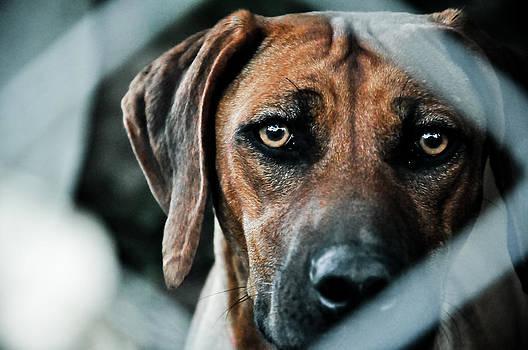 Dog by Lucas Sojo