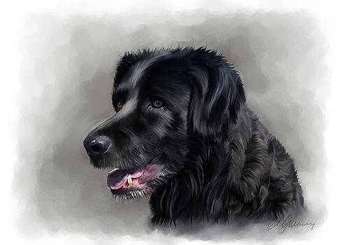 Dog Portrait by Michael Greenaway