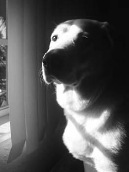 Lee Farley - Dog Sorrow