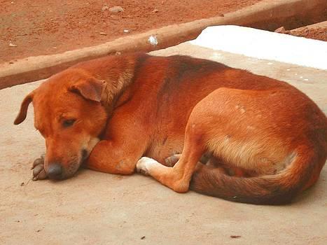 Usha Shantharam - Doggie Siesta