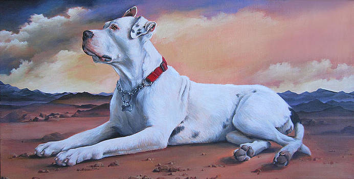 Dogo Argentino by Pamela Mower-Conner