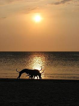 Dogs at sunset by Gal Moran