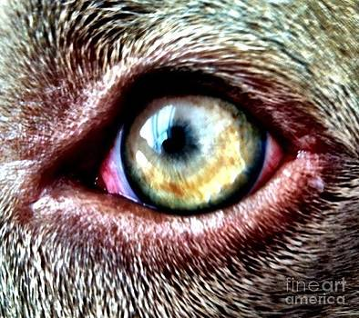 Dogs Eye by Ashleigh Windham
