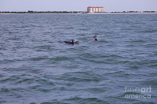 Dolphin Playtime by Tina Shamay
