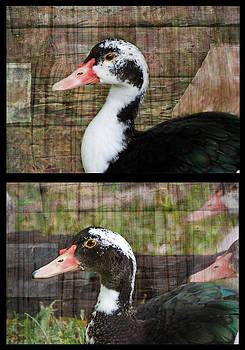 Lisa Moore - Double Duck
