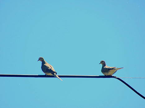 Doves on the Line by Amy Bradley
