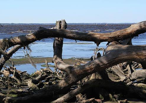 Downed Cypress Tree by Rod Andress