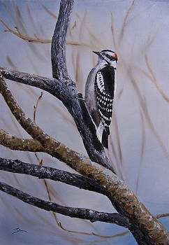Dee Carpenter - Downy Woodpecker
