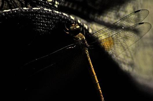 Dragon fly sleepwalker... by Kornrawiee Miu Miu