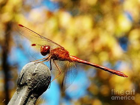 Judy Via-Wolff - Dragonfly 2