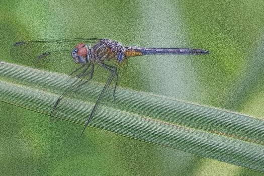 Dragonfly by Anthony Wilder
