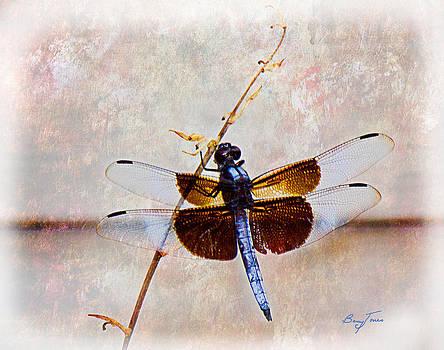 Barry Jones - Dragonfly Clinging