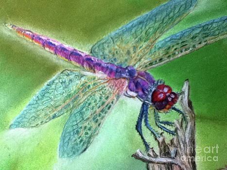 DragonFly crop2 by Teresa Vecere