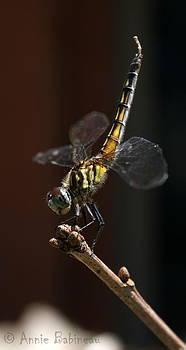 Anne Babineau - dragonfly handstand
