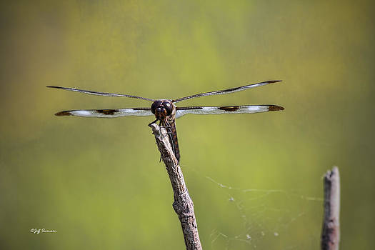 Dragonfly by Jeff Swanson