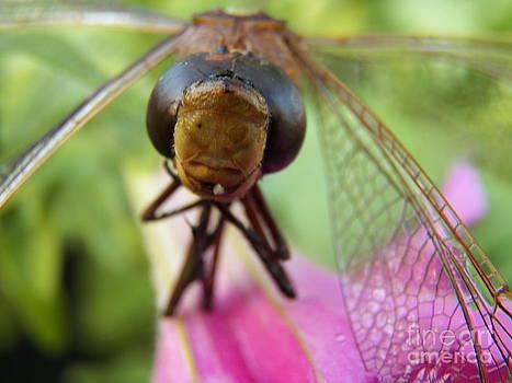 Judy Via-Wolff - Dragonfly