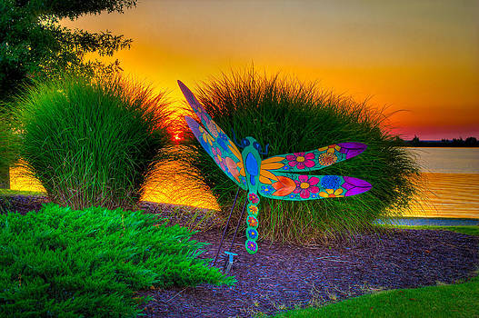 Dragonfly Sunset by Bobby Martin