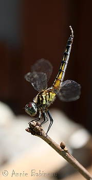 Annie Babineau - dragonfly yoga