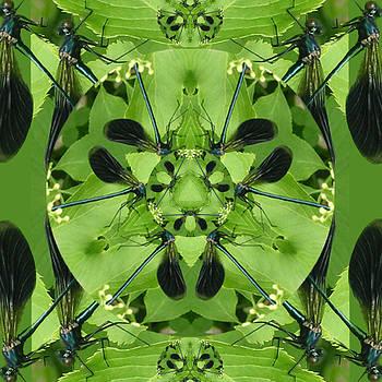 Dragonflyspy by Brigita Tekavcic