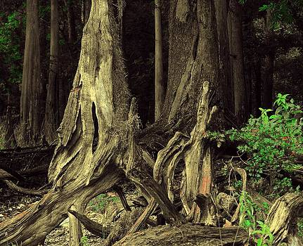 Dramatic Roots by Pam Utton