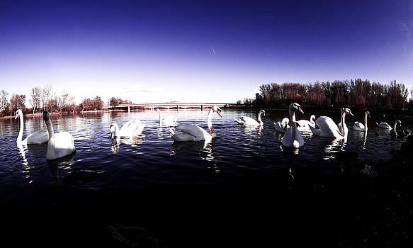 Dream Full of Swans by Domagoj Borscak