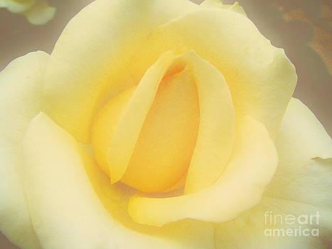 Andrea Kollo - Dreaming Roses