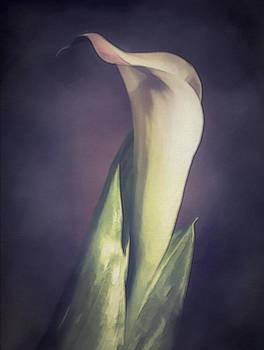 Dreamy Calla by Jill Balsam