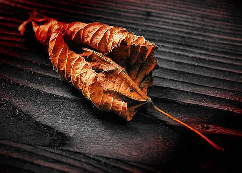 Dried leaf by Petr Nikl
