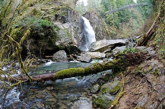 Margaret Pitcher - Drift Creek Falls