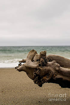 Drift Wood by Patty Descalzi