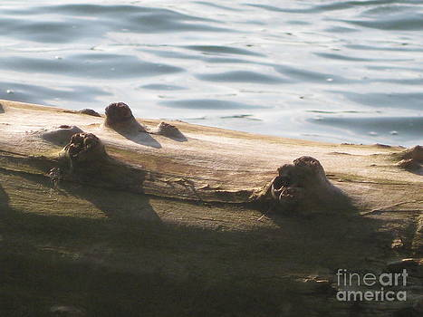 Driftwood and Water by Donna Renier