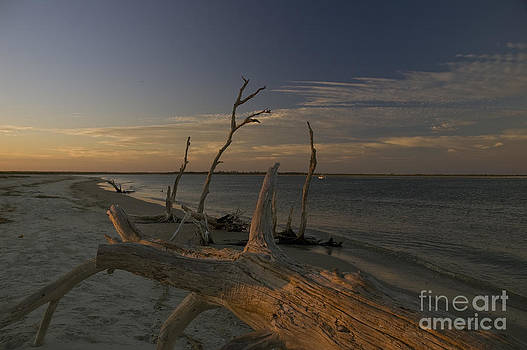 Tim Mulina - Driftwood at Sunset