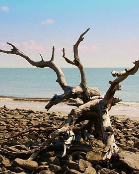 Driftwood Beach 1 by Jim Ziemer
