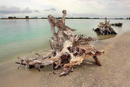 Carmen Del Valle - Driftwood Beach