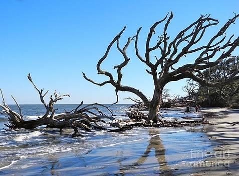 Driftwood Beach Jekyll Island GA  by Pauline Margarone