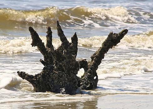 Driftwood Dragon by Jim Ziemer