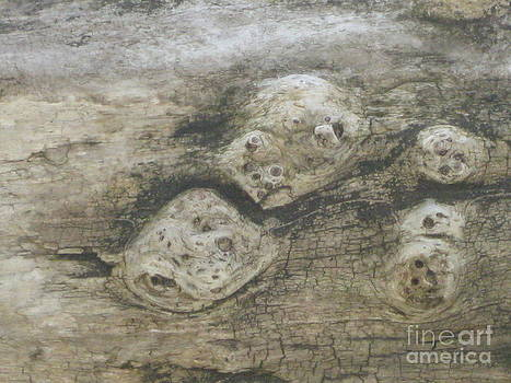 Driftwood Faces by Donna Renier