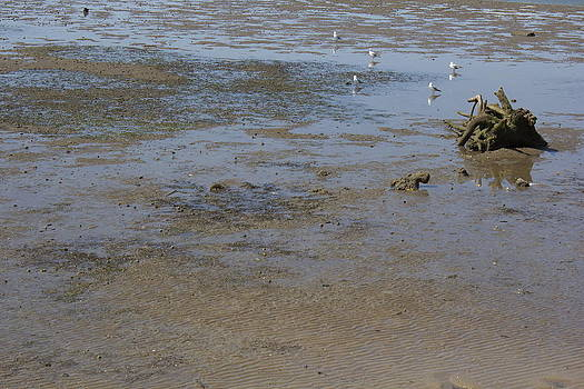 Driftwood Mud And Gulls by Michael Clarke JP