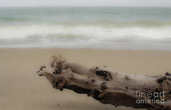 Driftwood by Patty Descalzi