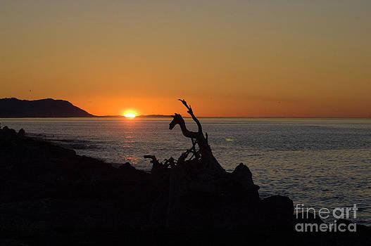 Tim Mulina - Driftwood Sunset
