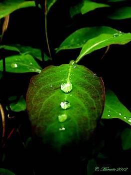 Droplet by Cindy Marcotte
