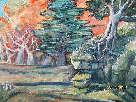 Dry Creek by Steven Holder